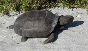Joe Angelo - Turtle 2